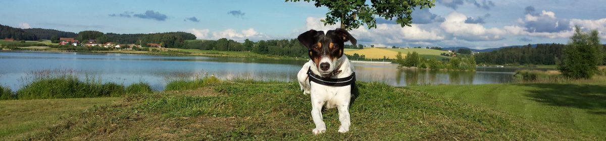 Bayern mit Hund