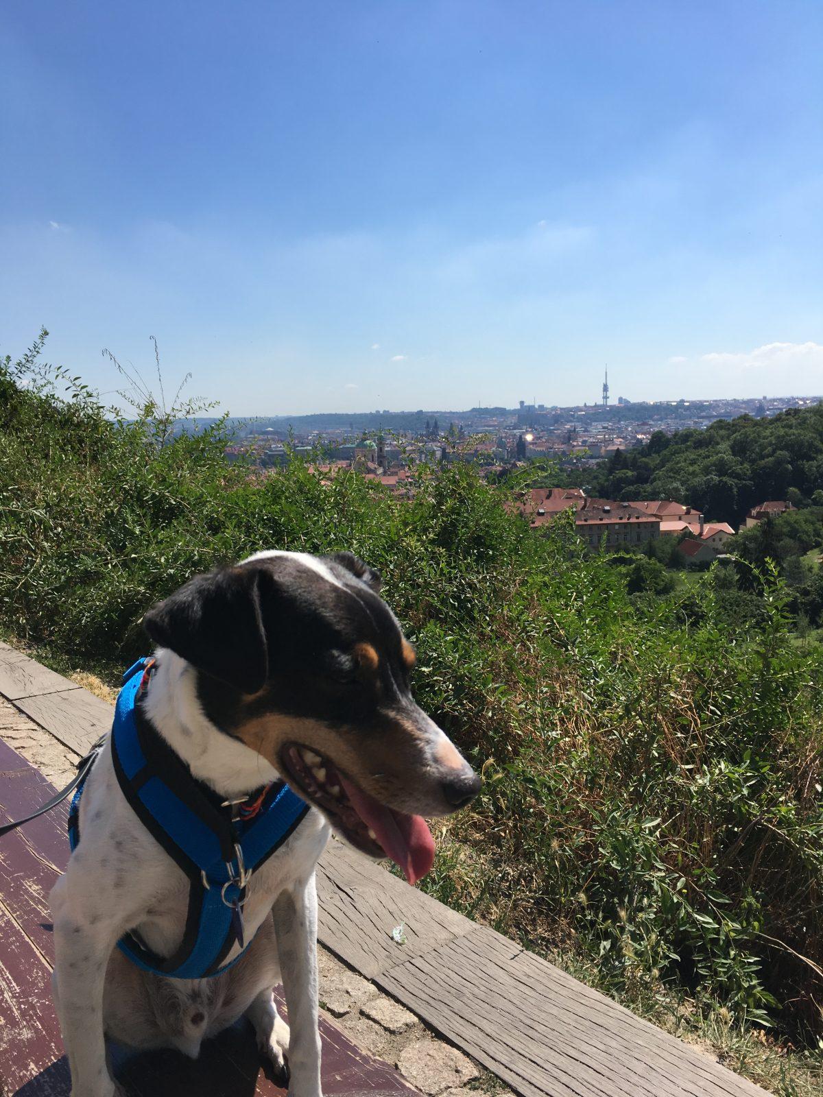 Sommer in Prag