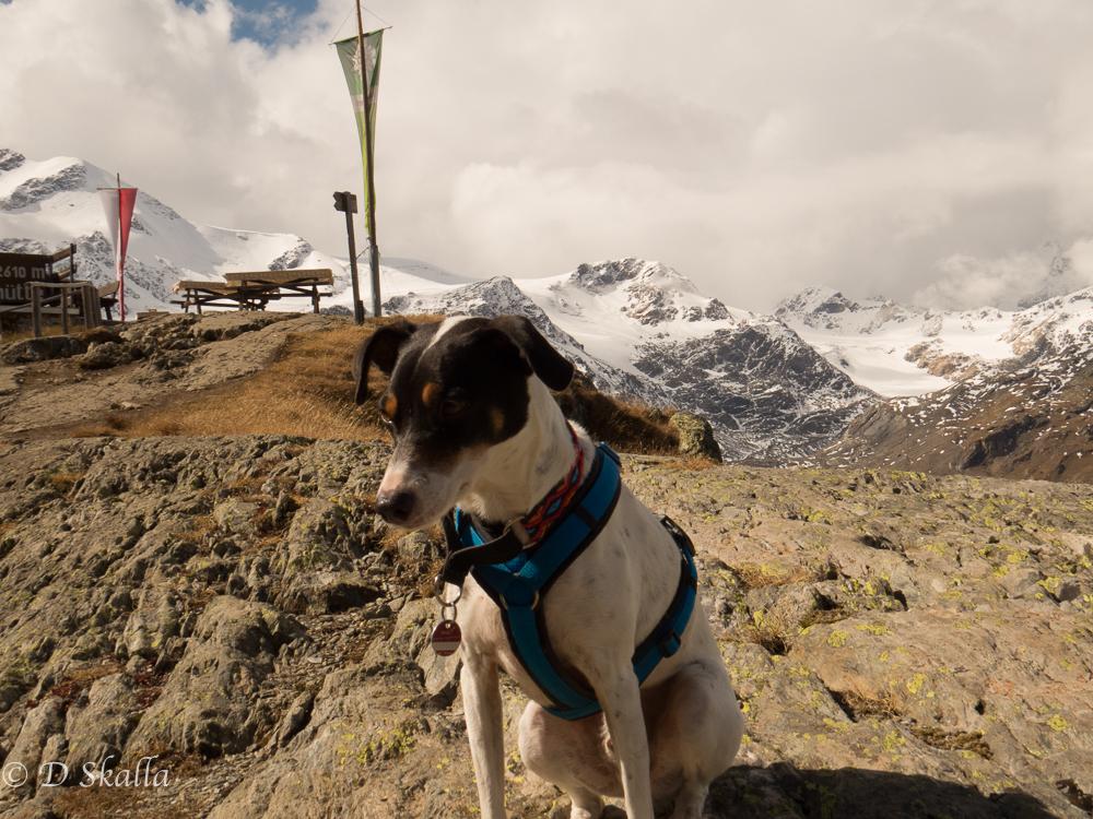 Herbst in Südtirol: mit dem Hund durch die Plimaschlucht zur Marteller Hütte
