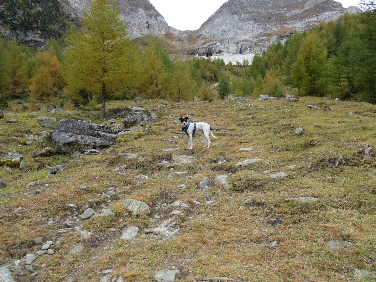 Entspannte Wanderung auf die Göflaner Alm