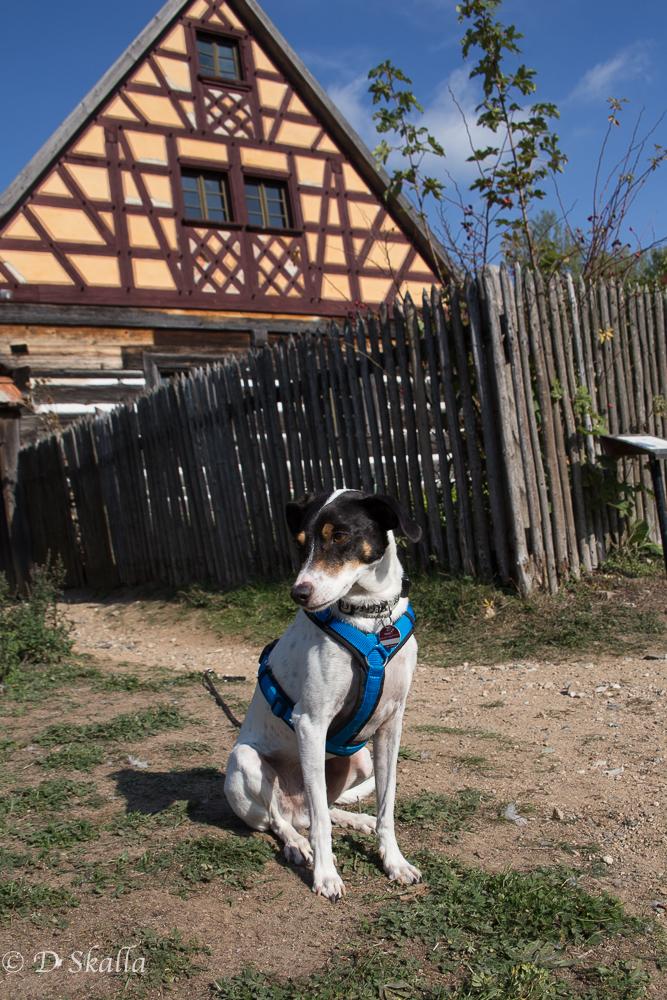 Mit dem Hund in die gute alte Zeit: Oberpfälzer Freilandmuseum Neusath-Perschen
